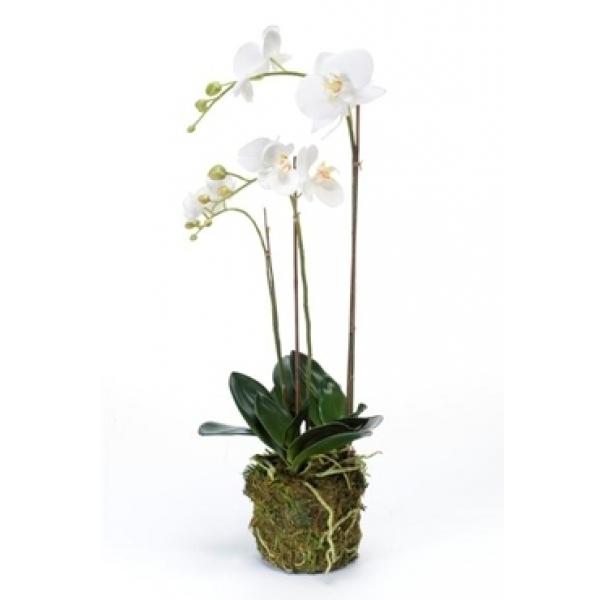 Kunstplant Phalaenopsis with moss white M