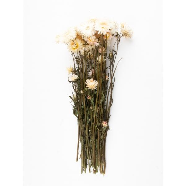 Gedroogde Helichrysum Crême wit