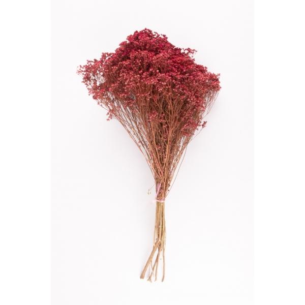 Gedroogde Broom Bloom Donker Roze