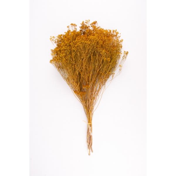 Gedroogde Broom Bloom Geel