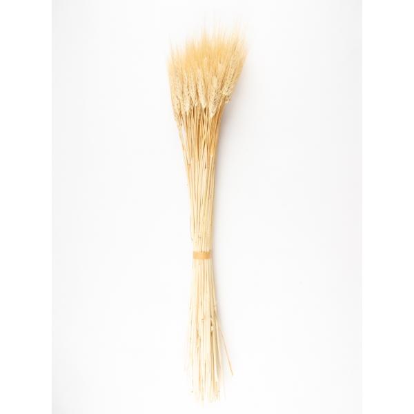 Gedroogde tarwe Blond Beard Naturel