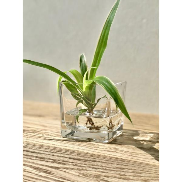 Accuvaas glas vierkant 8x8 cm